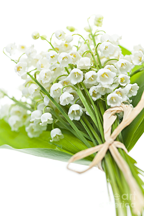 1-lily-of-the-valley-bouquet-elena-elisseeva